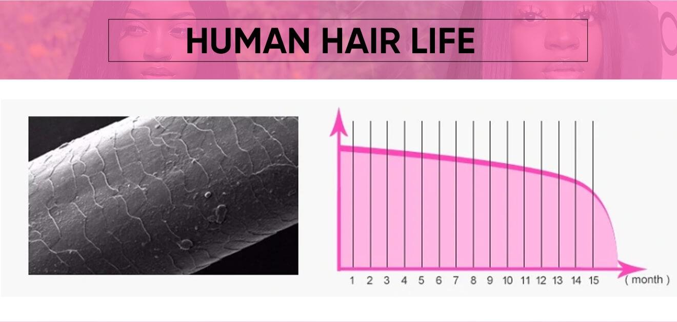 4x4 lace closure wig Bob Hair Wigs